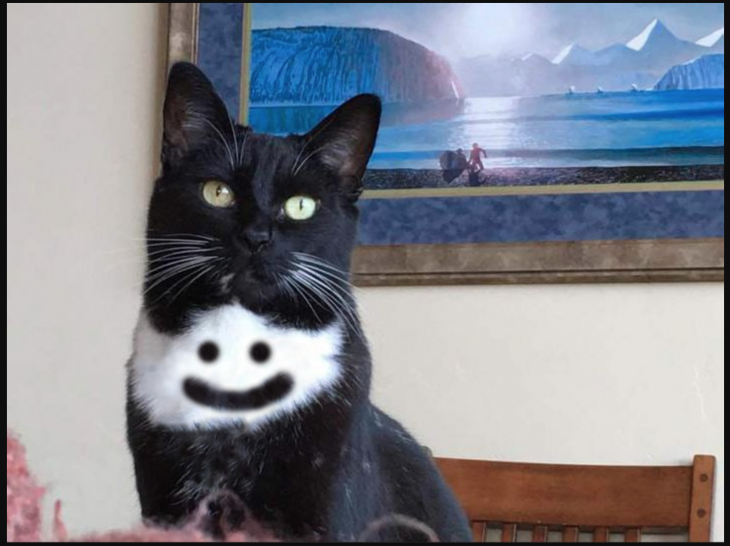 Gato punisher