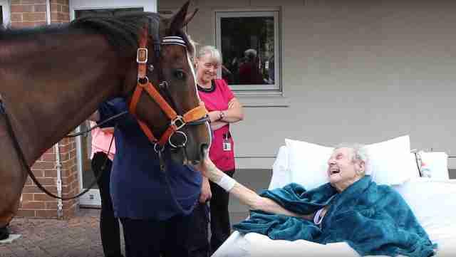 ultimo sueño caballo