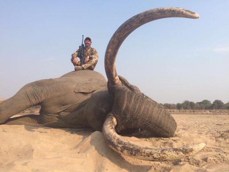 cazador elefante