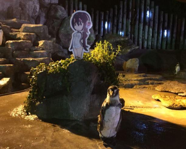 Pingüino se enamora de un dibujo