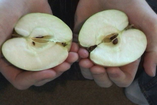 partir manzana manos
