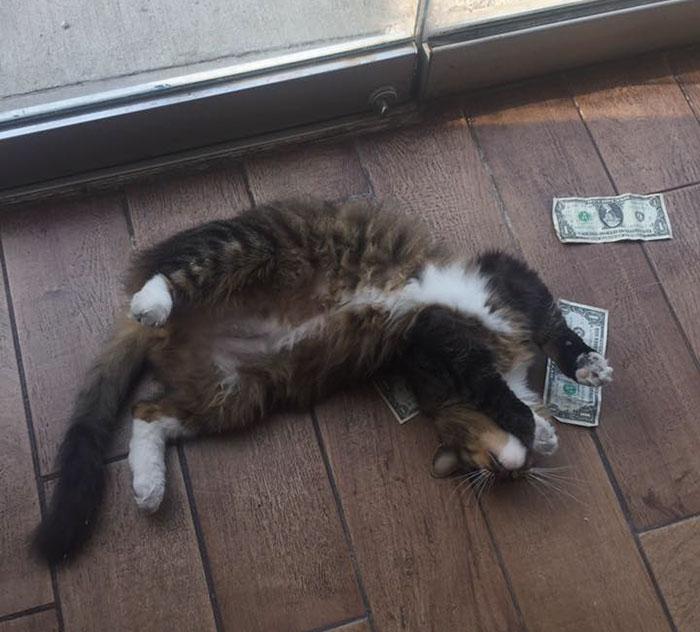Gato con billetes