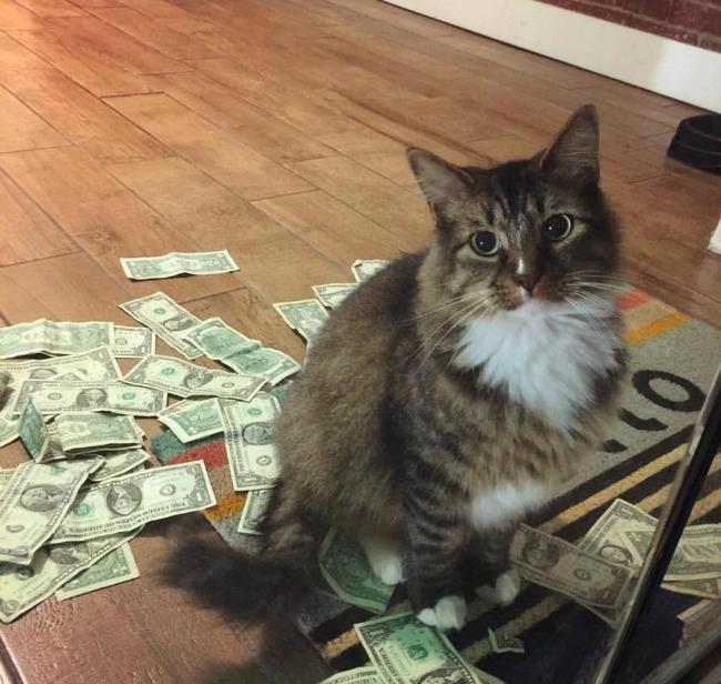 Gato que roba dólares
