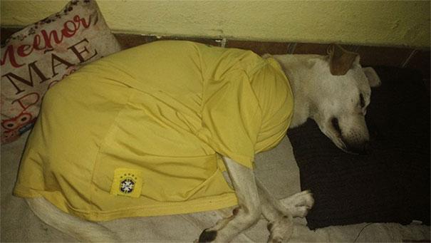 perro mea espalda de hombre