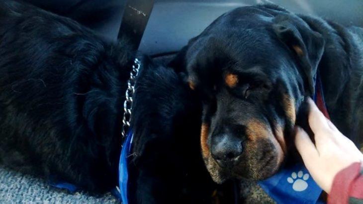 perro llora la muerte de su amigo