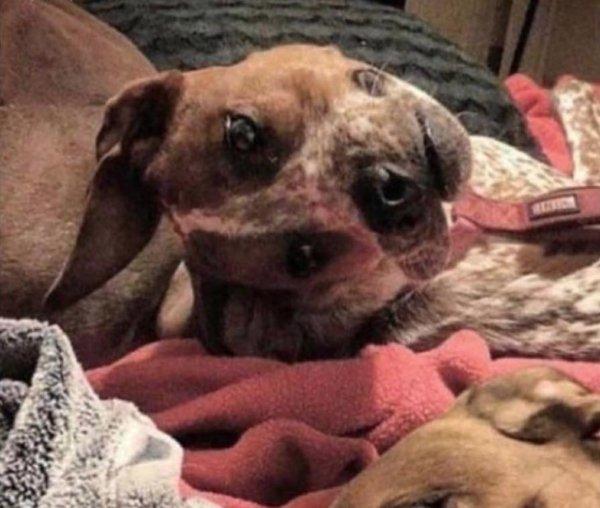 perro desfigurado