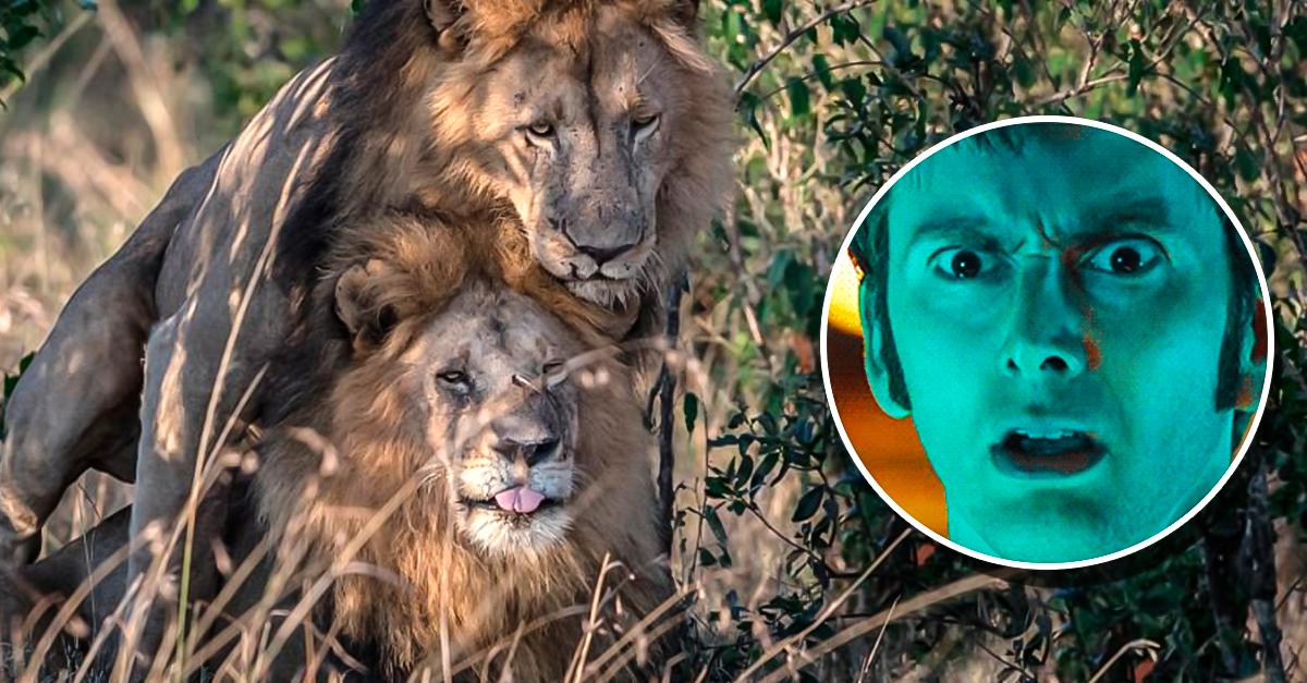 kenia culpa turismo gay dos leones