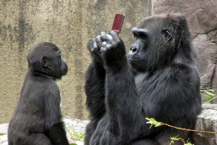 Gorila le toma foto a su cría