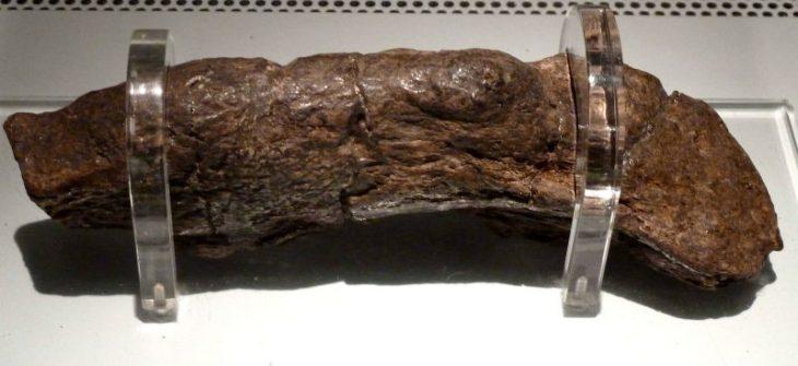 Heces fecales más antiguas del mundo