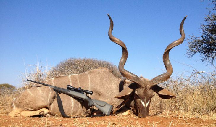 Animales caza
