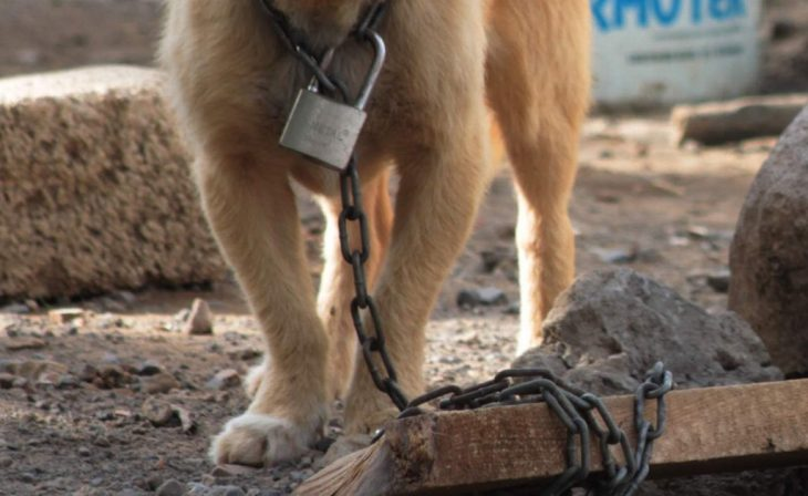 Rusia contra maltrato animal