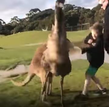 canguro vs niño