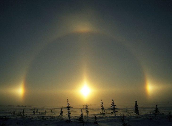 Perros del Sol