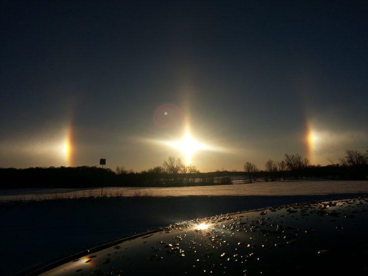 Perros del Sol en Michigan