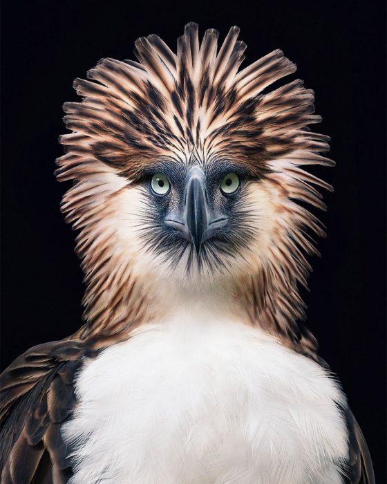 agfil 560x700 Fotógrafo retrata especies en peligro de extinción… Míralas bien, esta podría ser tu última vez