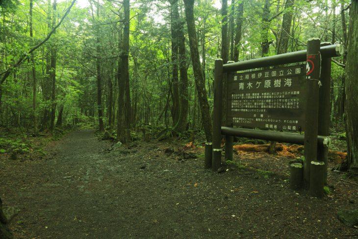Mar de Árboles en Japón