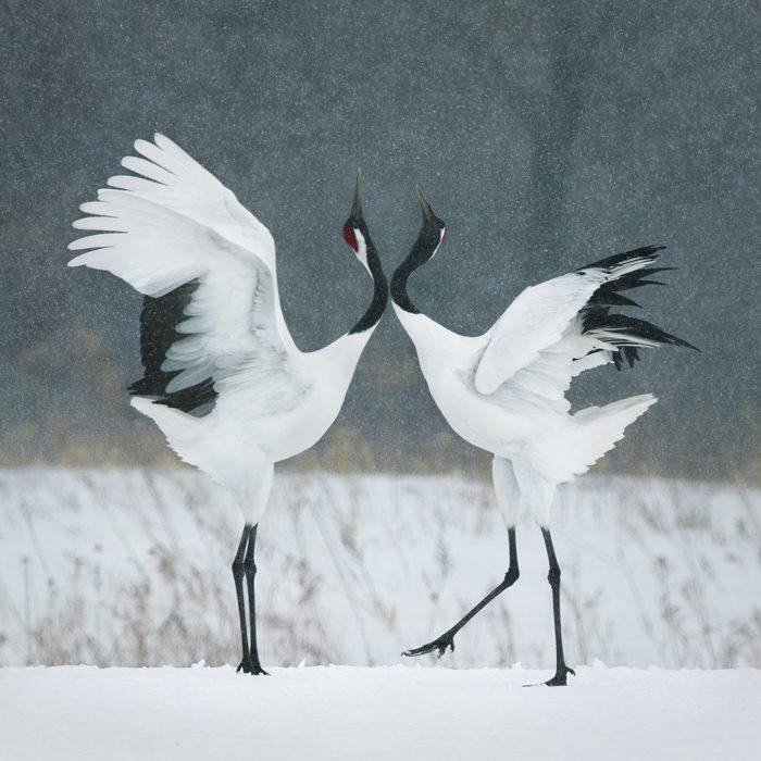grudle 700x700 Fotógrafo retrata especies en peligro de extinción… Míralas bien, esta podría ser tu última vez