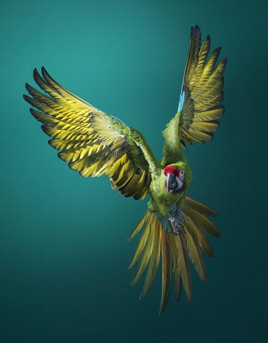 guacamil 548x700 Fotógrafo retrata especies en peligro de extinción… Míralas bien, esta podría ser tu última vez