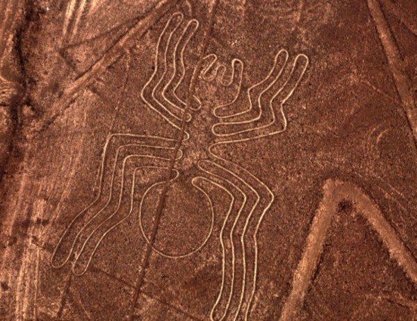Araña en Desierto de Nazca