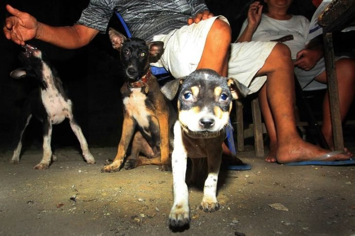 Perro para sacrificio en Tailandia