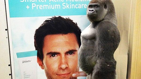Gorila batalla photoshop