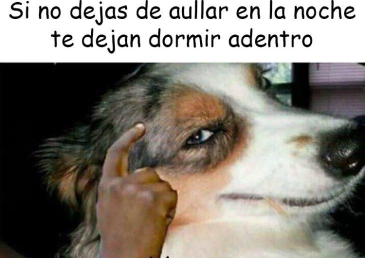 perro v3rgas