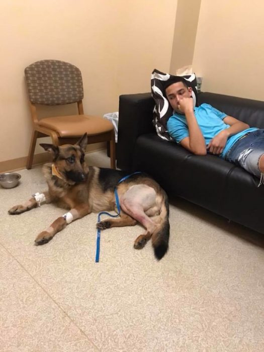 Rex perro héroe