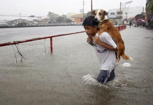 salvando cachorros