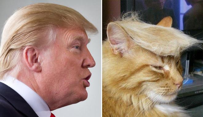 donald-trump-cat