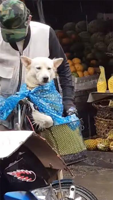 Anciano con perrito