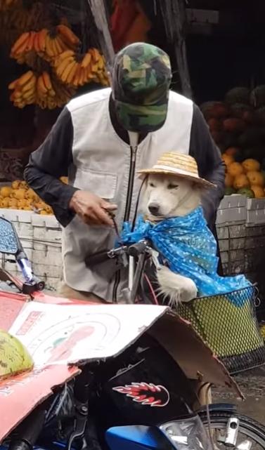 Perrito con sombrero