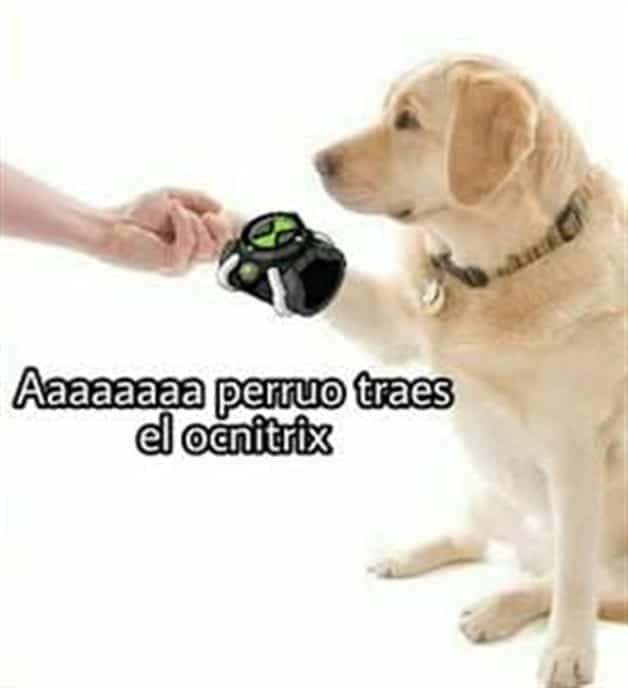 ah perro traes el omnitrix