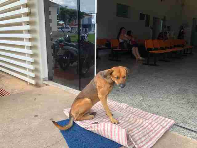 tmg article tall 2 Perrito lleva 4 meses esperando a su amo en la puerta del hospital; aún no sabe la noticia