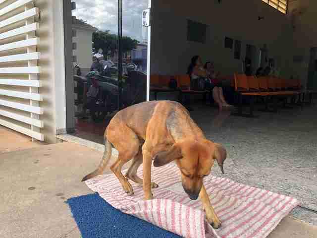 tmg article tall 3 Perrito lleva 4 meses esperando a su amo en la puerta del hospital; aún no sabe la noticia