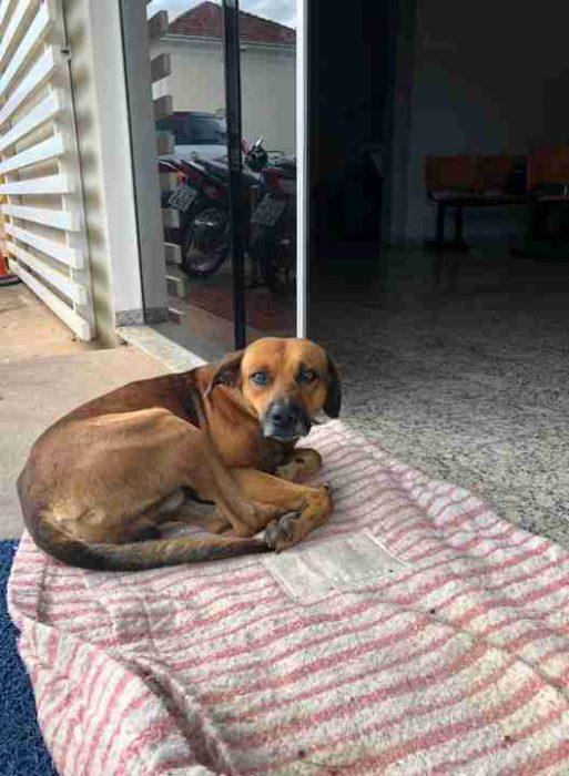 tmg article tall 4 513x700 Perrito lleva 4 meses esperando a su amo en la puerta del hospital; aún no sabe la noticia