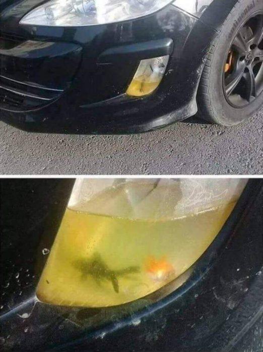 carro pez