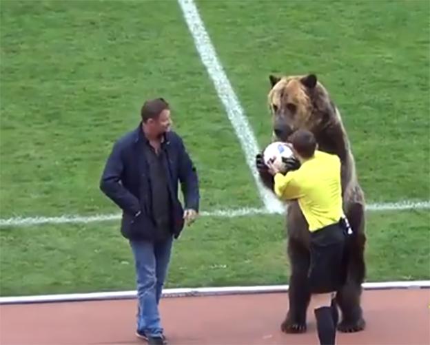 Un oso en partido de futbol en Rusia