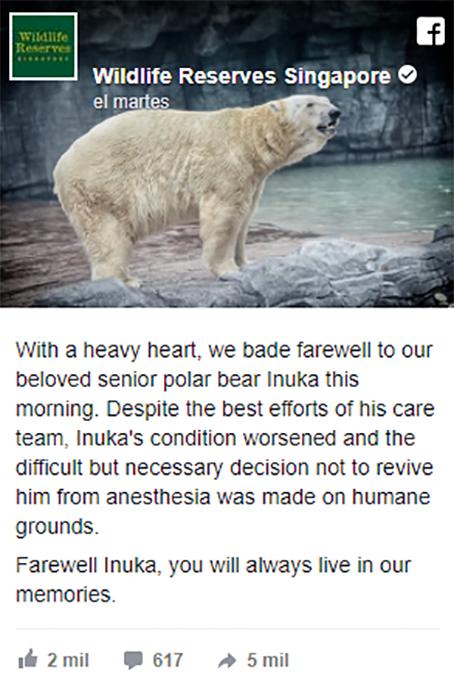 Oso polar muere