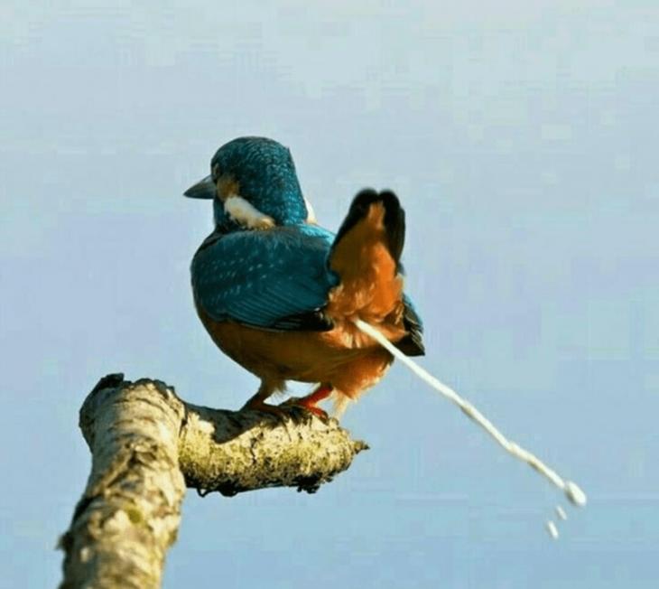 Pájaro haciendo popó