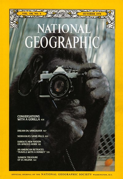 Koko en National Geographic