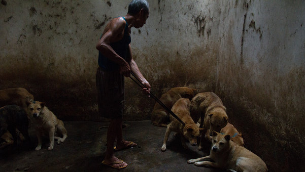 Granja de perros