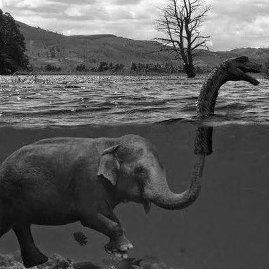 Elefante es monstruo del lago ness