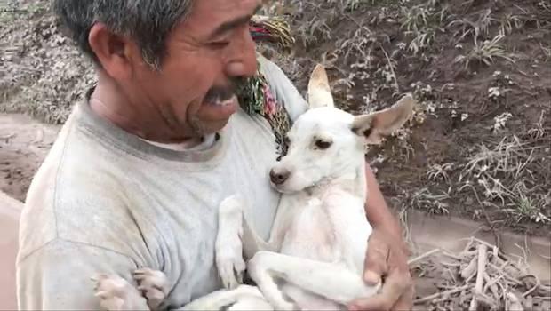 hombre-rescata-perro
