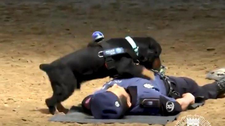 Poncho perro RCP