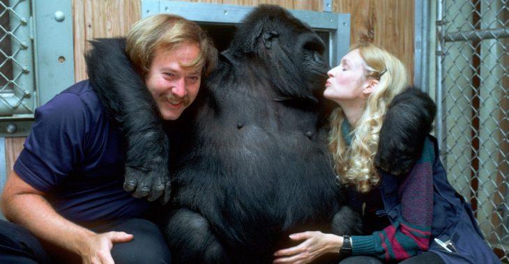 Koko con humanos