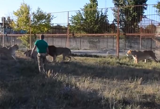 Hombre entre leones