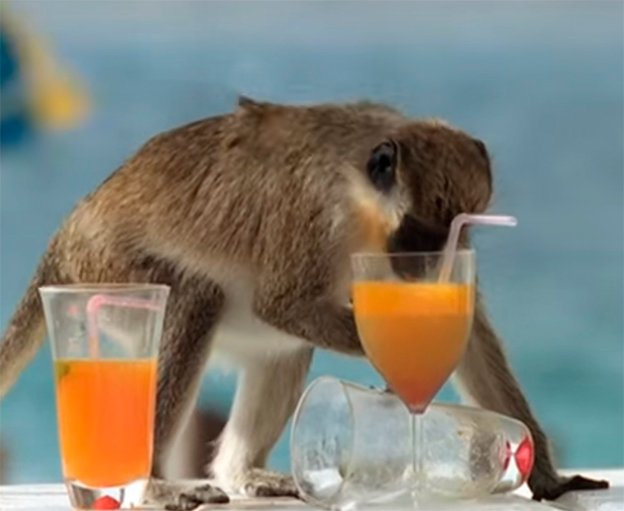 Mono ebrio
