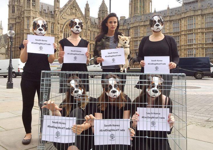 Protesta contra la matanza de perros