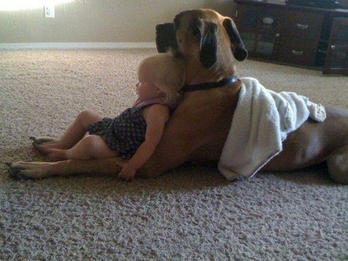 Perros fieles