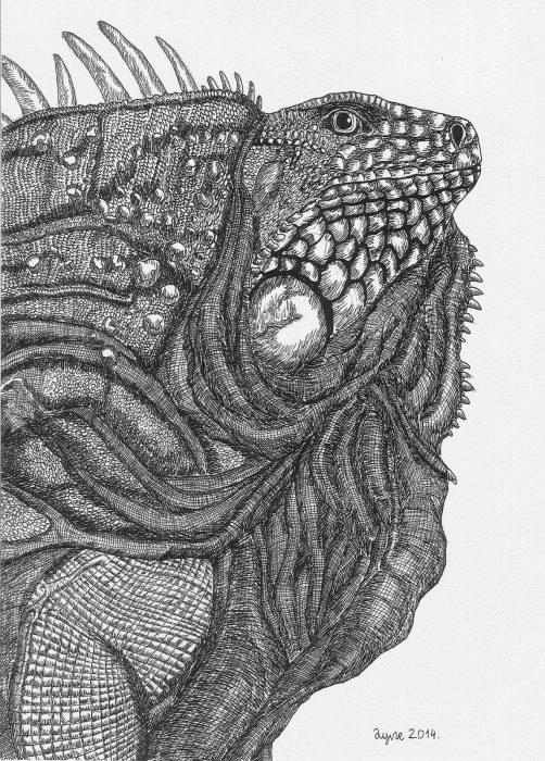 Dušan Krtolica dibujo iguana